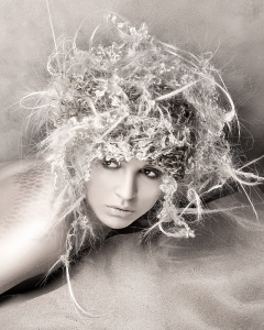 Coquillage Hair Gallery by Anne Veck Salons